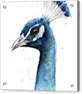Peacock Watercolor Acrylic Print