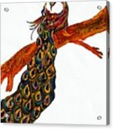 Peacock Xiii Acrylic Print