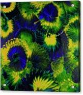 Peacocks On The Run Acrylic Print