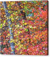 Peak Color Acrylic Print