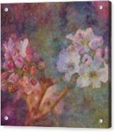 Pear Blossom Morning Impression 8941 Idp_2 Acrylic Print