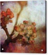 Pear Blossom Sunset 8930 Idp_2 Acrylic Print