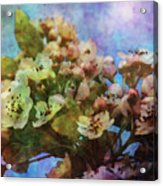 Pear Blossoms 8976 Idp_2 Acrylic Print