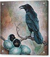 Pearl Of Wisdom Acrylic Print