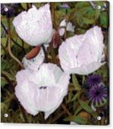 Pearlblossoms Acrylic Print