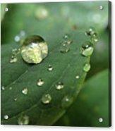 Pearls On Leaf 5 Acrylic Print