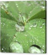 Pearls On Leaf Acrylic Print
