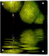 Pears And Its Reflection Acrylic Print