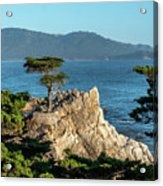 Pebble Beach Iconic Tree With Sun Light At Dusk Acrylic Print