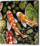 Pebbles And Koi Acrylic Print