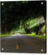 Pecan Alley Rays - Arkansas - Landscape Acrylic Print