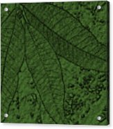 Pecan Tree Leaves Acrylic Print
