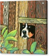 Peek-a-boo Fence Acrylic Print