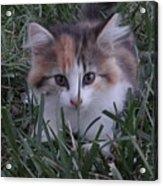 Peek A Boo Kitty Acrylic Print