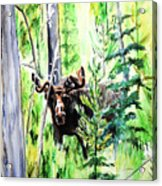 Peek A Boo Moose Acrylic Print