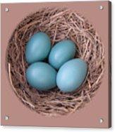 Peek Into A Robin's Nest Acrylic Print