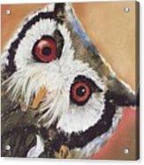 Peekaboo Owl Acrylic Print