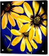 Peekaboo Sunflowers Acrylic Print