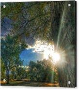 Peekaboo Tree Acrylic Print