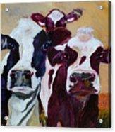 Peeker In The Field Acrylic Print