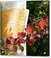 Peeling Bark Of White Birch Tree Acrylic Print
