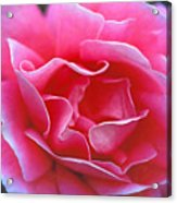 Peggy Lee Rose Bridal Pink Acrylic Print