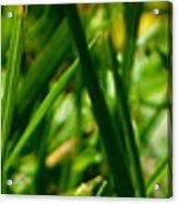Pei Grass - Top Acrylic Print