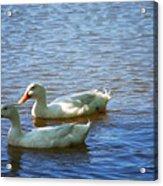 Pekin Ducks 20120515_15 Acrylic Print