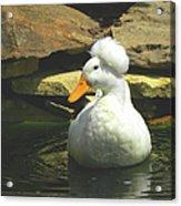 Pekin Pop Top Duck Acrylic Print