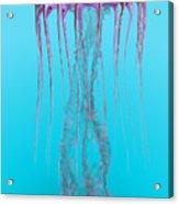 Pelagia Noctiluca Jellyfish Acrylic Print