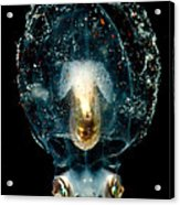 Pelagic Octopus Acrylic Print