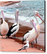 Pelican 5.0 Pearl Beach Acrylic Print
