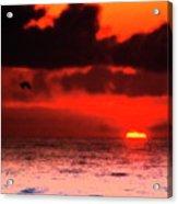 Pelican At Sunrise Acrylic Print