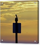 Pelican At Sunset Acrylic Print