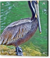 Pelican By The Pier Acrylic Print