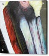 Pelican Closeup 2 Acrylic Print