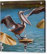 Pelican Crash Acrylic Print