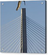 Pelican Diving Arthur Ravenel Jr Bridge Over The Cooper River In Charleston South Carolina Acrylic Print