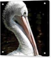 Pelican Dreams Acrylic Print