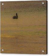 Pelican Drift Acrylic Print