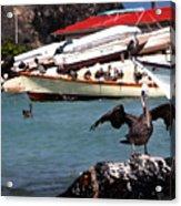 Pelican Drying Wings Acrylic Print
