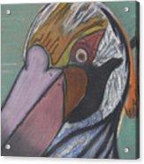 Pelican Face Acrylic Print
