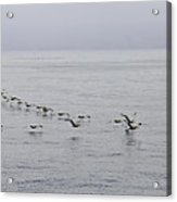 Pelican Formation Acrylic Print