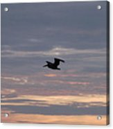 Pelican In A Painted Sky Acrylic Print