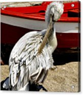Pelican In Mykonos II Acrylic Print