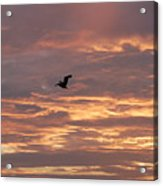 Pelican In Painted Sky Acrylic Print
