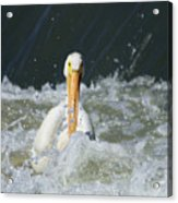 Pelican In Rough Water Acrylic Print