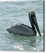 Pelican In The Sparkling Water Acrylic Print