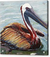 Pelican In The Water Acrylic Print