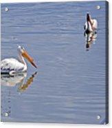 Pelican Mates Acrylic Print